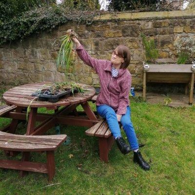 Bailiffgate enjoy a garden spruce